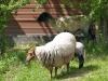 5064 - CZH Kindertag auf dem Bauernhof - 11.jpg