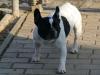 4887 - Fruehling - 3 - Franz Dogge Wachhund