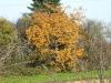 5893 - Herbst Baum2