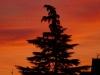 5893 - Herbst Sonnenuntergang