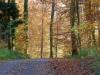 5893 - Herbst Waldweg