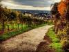 5893 - Herbst Wingert Wein Blick auf Leimen Weinberg