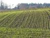 5893 - Herbst Wintersaat Feld
