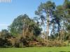 9464 - Sturmschäden Golfplatz Rheintal - 12