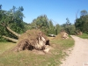 9464 - Sturmschäden Golfplatz Rheintal - 17