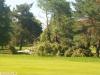 9464 - Sturmschäden Golfplatz Rheintal - 5