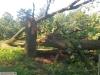 9464 - Sturmschäden Golfplatz Rheintal - 6