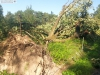9464 - Sturmschäden Golfplatz Rheintal - 7