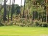 9464 - Sturmschäden Golfplatz Rheintal - 9