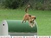 972-hundetag-sa-10-jpg