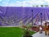 4948 - Lavendelgarten.jpg