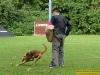 4313-polizeihunde-1