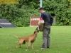 4313-polizeihunde-2