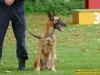 4313-polizeihunde-6
