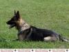 799-pd-hundestaffel-5-jpg