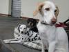 15723-Raclette-Hunde