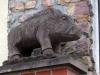 14116-OB-Rundgang-11-Wildsau-Schwein