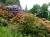 2194 - Rhododendron-Anlage HD - 10.jpg