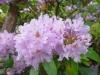 2194 - Rhododendron-Anlage HD - 2.jpg