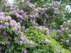 2194 - Rhododendron-Anlage HD - 3.jpg