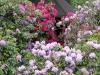 2194 - Rhododendron-Anlage HD - 4.jpg