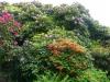 2194 - Rhododendron-Anlage HD - 7.jpg