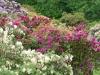 2194 - Rhododendron-Anlage HD - 8.jpg