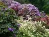 2194 - Rhododendron-Anlage HD - 9.jpg