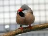 5790 - Vogelausstellung Sandhausen - 10