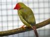 5790 - Vogelausstellung Sandhausen - 11