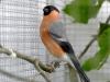 5790 - Vogelausstellung Sandhausen - 15