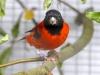 5790 - Vogelausstellung Sandhausen - 8
