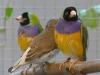 4403-vogelzuechter-leimen-3