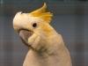 4403-vogelzuechter-leimen-8