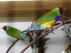 4434-vogelzuechter-nussloch-herbstfest-12