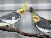 4434-vogelzuechter-nussloch-herbstfest-6