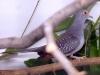 4434-vogelzuechter-nussloch-herbstfest-7