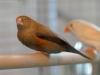 5820 - Vogelzüchter Leimen - 2