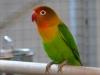 5820 - Vogelzüchter Leimen - 5