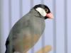 5820 - Vogelzüchter Leimen - 6