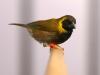 5820 - Vogelzüchter Leimen - 7
