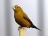 5820 - Vogelzüchter Leimen - 8