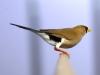 5820 - Vogelzüchter Leimen - 9