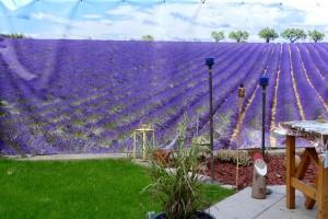 4948 - Lavendelgarten