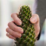 """Der """"kleine grüne Kaktus sticht"""" - </br>S-Immobilien Kraichgau zeigt humorvoll warum"""