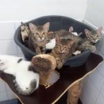 Tierheim Heidelberg überfüllt mit Katzen