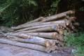 Das Kreisforstamt informiert: Feuchte Witterung erschwert Waldpflege