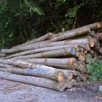 """Brennholz ab """"Wald"""" – Das Kreisforstamt informiert"""