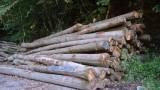 Bestellung zur Abgabe von Brennholz aus dem Gemeindewald Nußloch