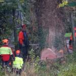 GSS St. Ilgen: Neubau der Gemeinschaftsschule erfordert Baumfällungen